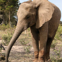 Exciting news at our Elephant Care and Research project