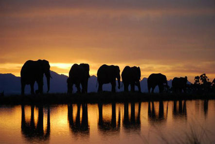 For the love of elephants! - Chris' time in South Africa