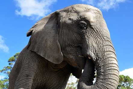 My time at the Elephant Care and Research project in South Africa