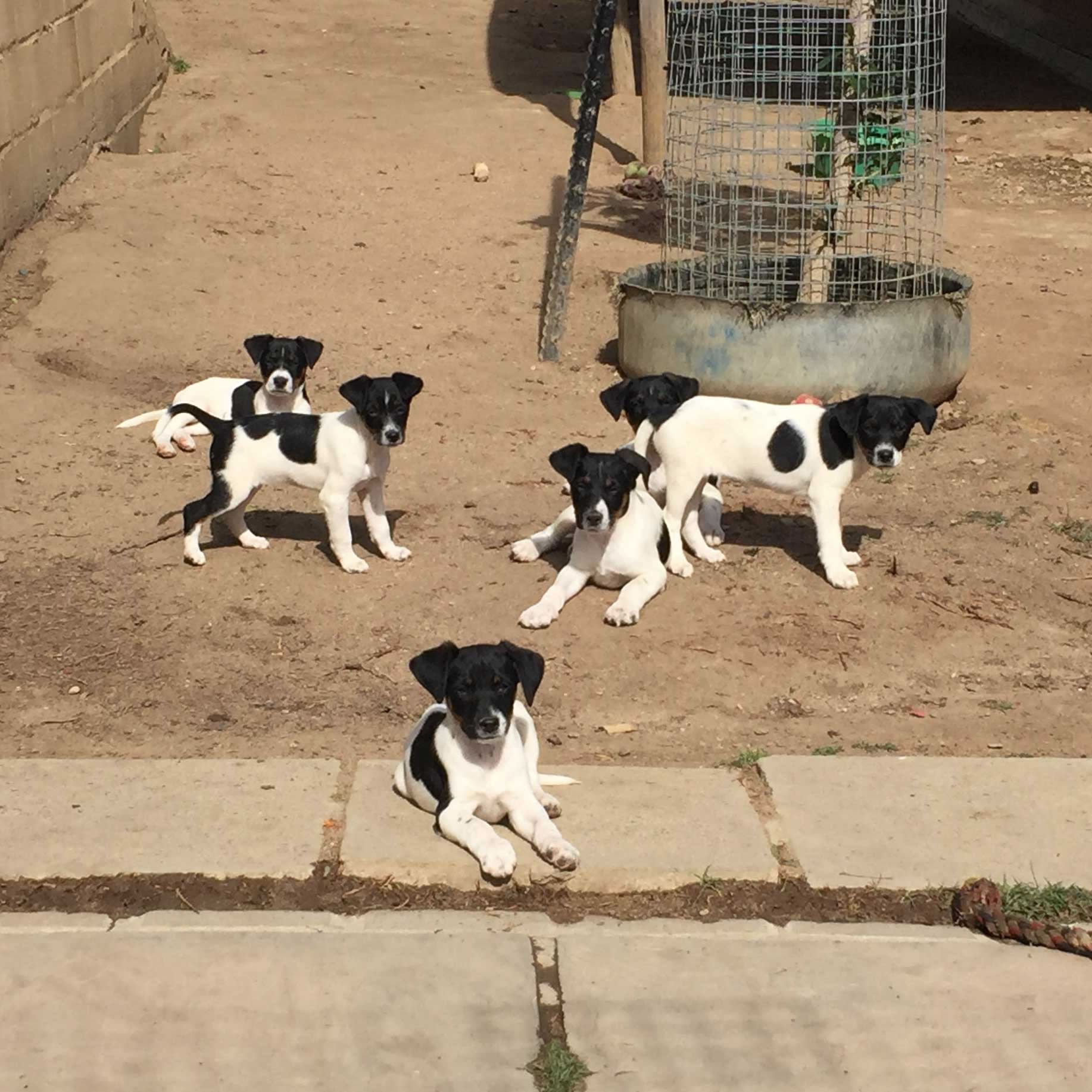 New Dog and Cat Rescue project in South Africa!