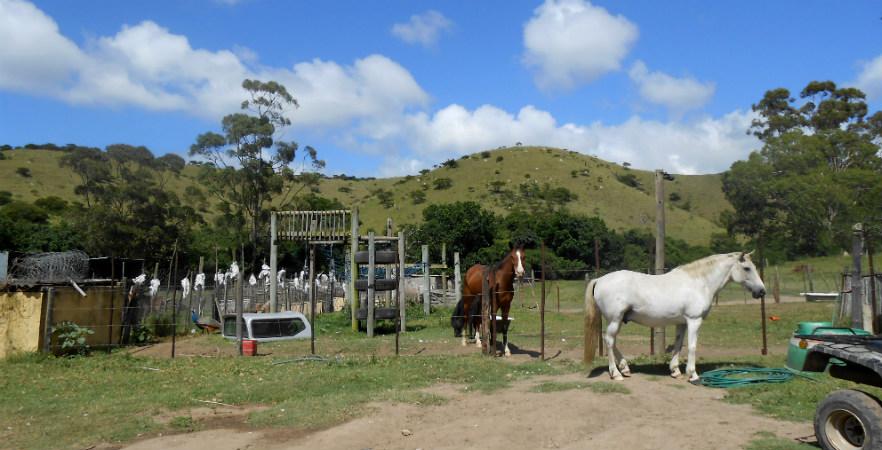 Horse Rehabilitation South Africa   Pod Volunteer