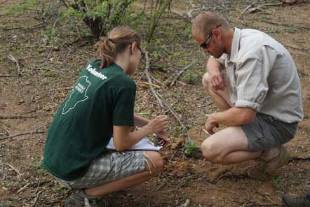 Volunteers planting trees in Kruger South Africa