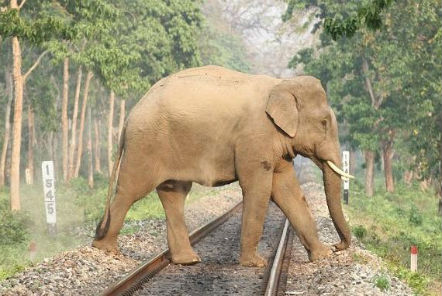 Stop trains from killing wild elephants in Sri Lanka