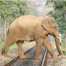Stop trains from killing wild elephants in Sri Lanka