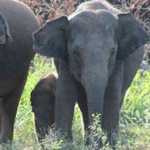 Volunteers witness an incredible elephant encounter!