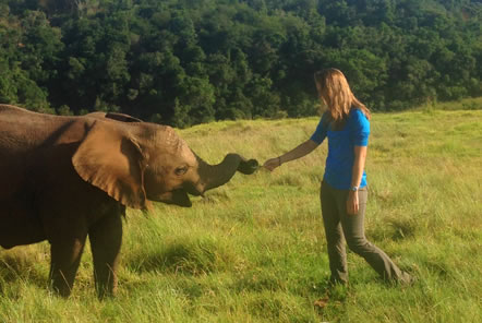 With one of the younger elephants