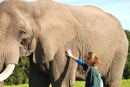 Shannon's Elephant Care and Research Guest Blog