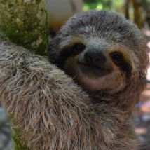 International Sloth Day – Updates from Costa Rica!