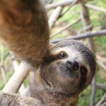 Seven Spectacular Fact about Sloths!