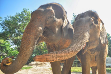 Video: Thailand Elephant Care