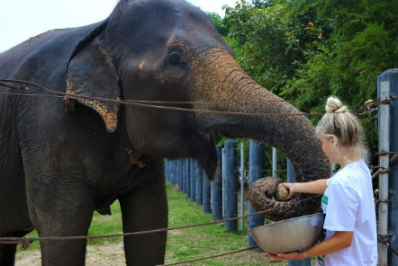 The Under 18 Elephant Care and Wildlife Rescue team share their experiences!
