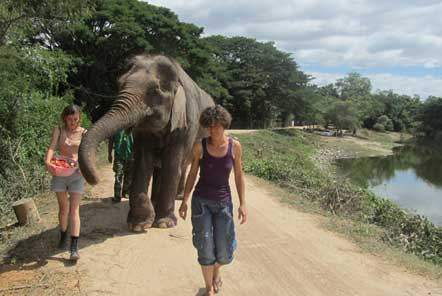 Waling with elephants