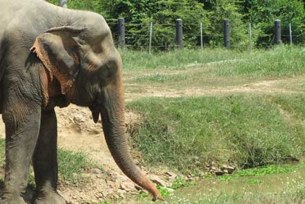 U18 Elephant Care in Thailand