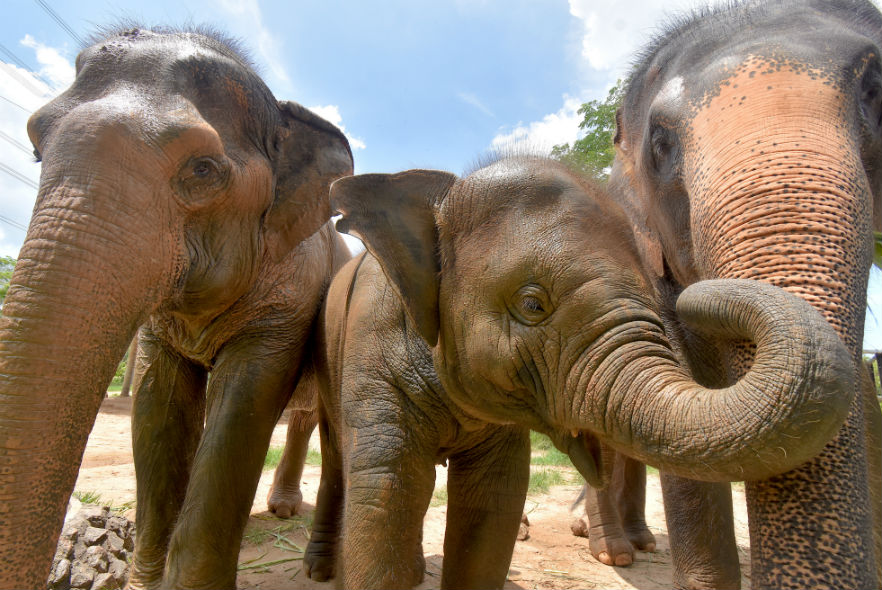 Elephants living happily at the sanctuary
