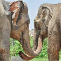 Elephant Care in Thailand - A background