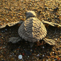 A day in the life of a Turtle Conservation volunteer!