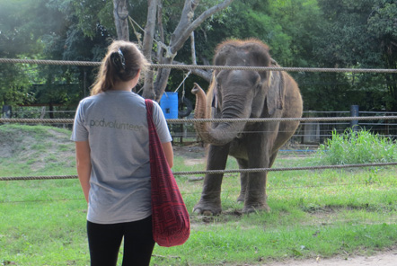 Pod Volunteer Elephant Care