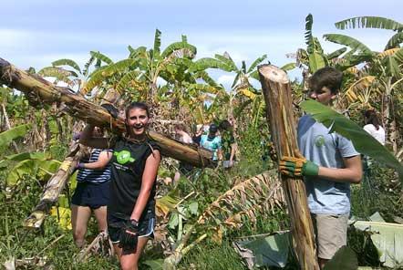 Banana harvesting on Elephant Care role