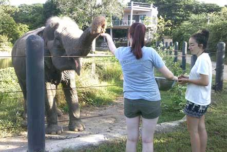 Volunteers hand feeding elephants at project