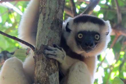World Lemur Day 2018 – Things we love about lemurs!