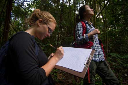 Rainforest research in the amazon