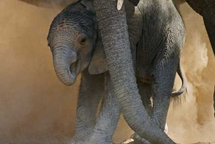 Namibia Desert Elephant