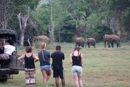 Observing elephants