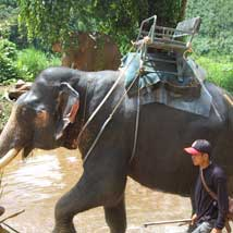 Should I ride an elephant?