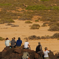 Namibia volunteers tracking elephants