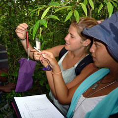 Conservation volunteering sample research
