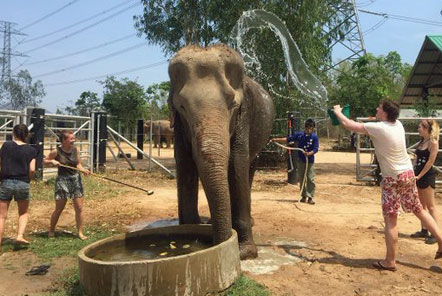 James washing one of the elephants