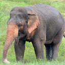 Elephant and Wildlife Conservation